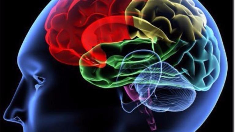 Thuyết Trí thông minh đa dạng - GS Howard Gardner tại Đại học Harvard