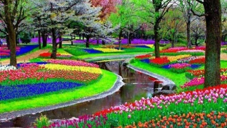 Loài hoa nào nói lên tính cách của bạn ?