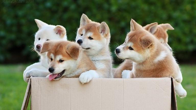 Nhìn hình đoán tên các loài chó !