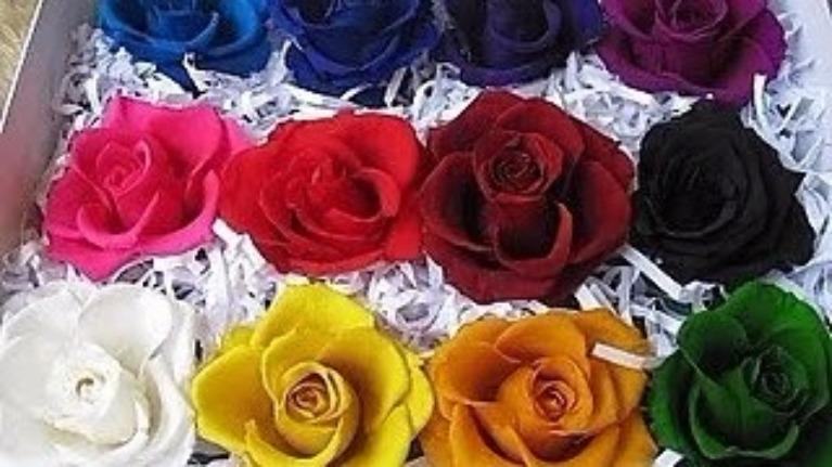 Loài hoa hồng nào tượng trưng cho con người bạn?