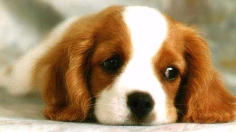 """Bạn là loại """"cún"""" nào ? (*♡∀♡)"""