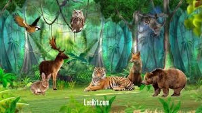 Bạn hiểu động vật đến đâu ?