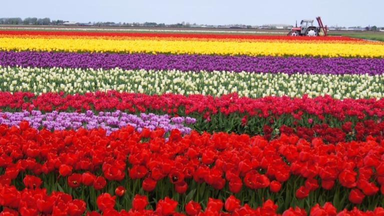 Bạn biết bao nhiêu tên tiếng anh của các loài hoa