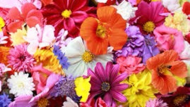Loài hoa tượng trưng cho 12 cung hoàng đạo