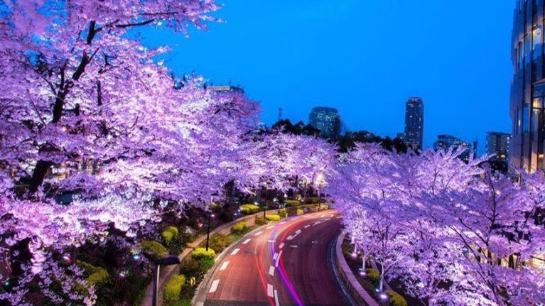 Bạn có hiểu rõ Nhật Bản?
