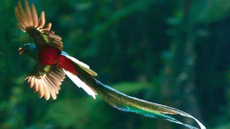 Bạn có am hiểu về các loài chim đẹp nhất thế giới?