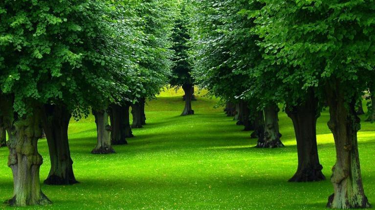 Bạn có biết điều thú vị về những loài cây trên thế giới?