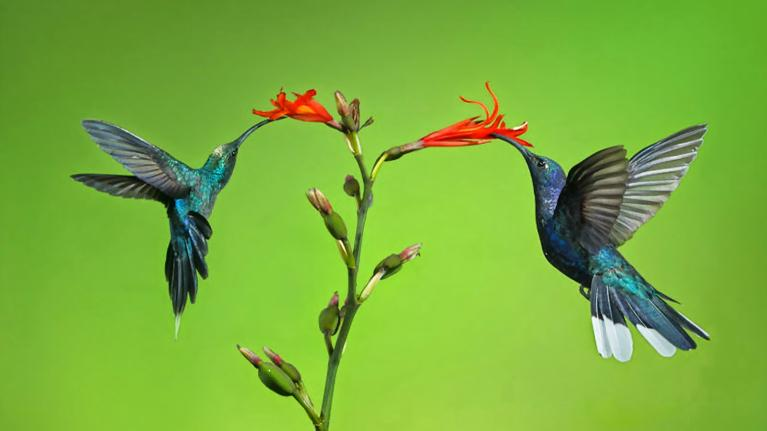 Tìm hiểu từ vựng về một số loài chim trong tiếng Anh nhé !!!