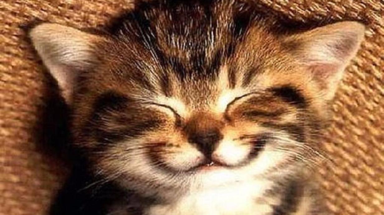 Nụ cười tiết lộ gì về tham vọng của bạn?