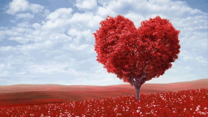 Đo độ lãng mạn trong tình yêu của bạn qua các loài hoa