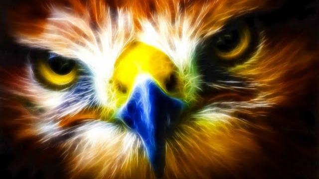 """Bạn sẽ """"bay cao và bay xa"""" như loài chim nào?"""