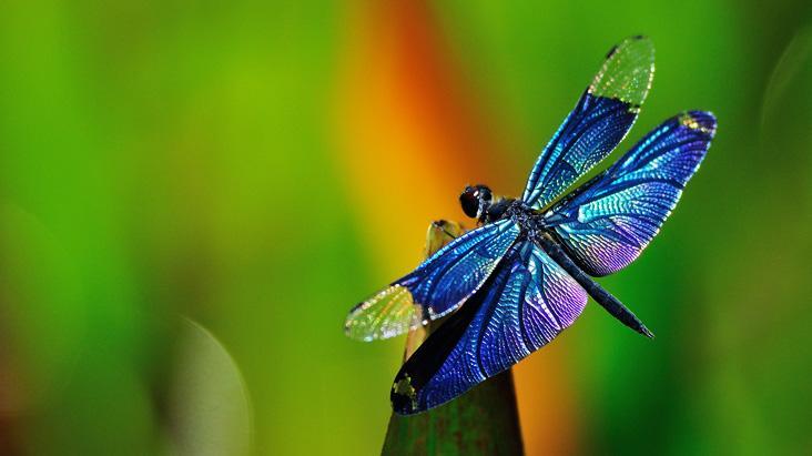 Bạn là cư dân nào của thế giới côn trùng?
