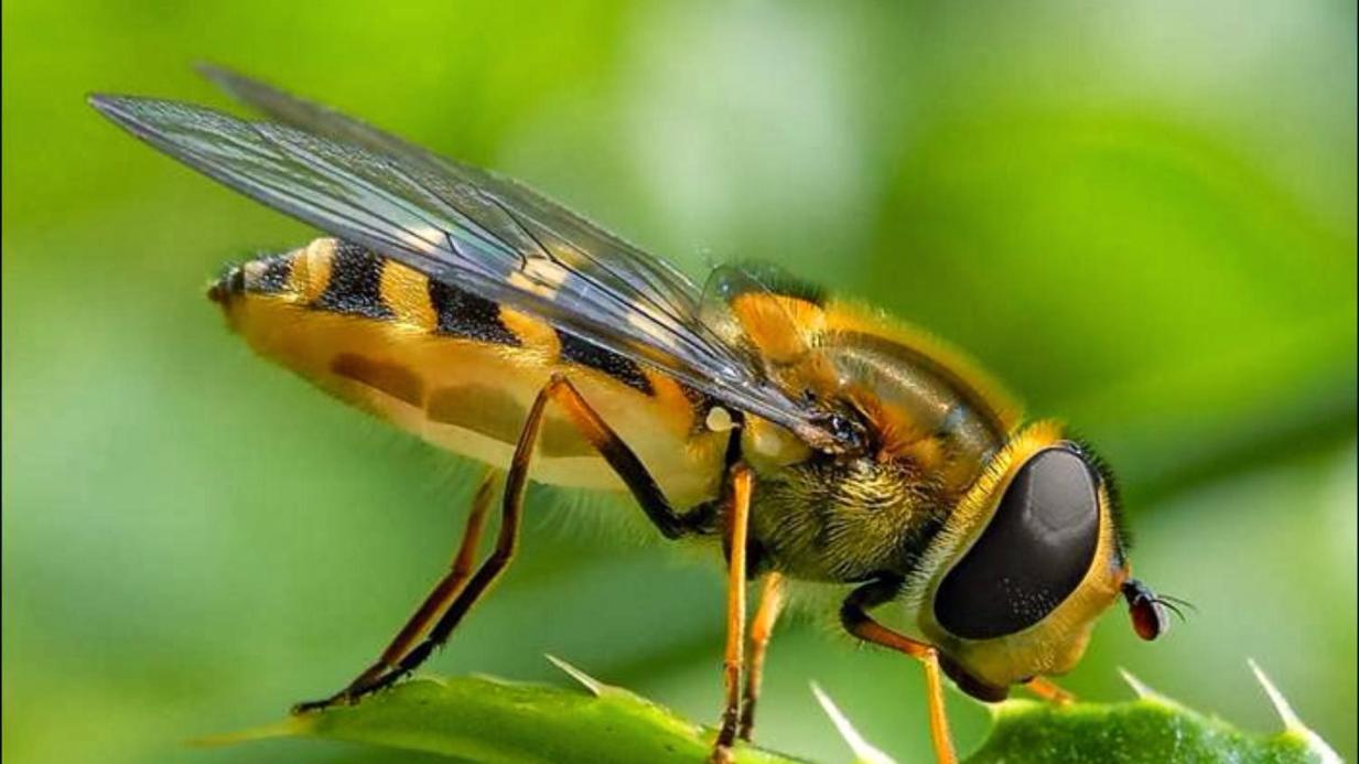 """Liệu bạn có biết những cái """"nhất"""" của thế giới côn trùng?"""